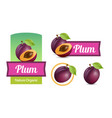 set of sticker and labels with plums isolated on vector image vector image