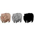 set of wombat character vector image