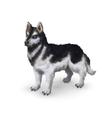 Photorealistic husky dog on white vector image