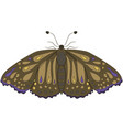 brown moth drawing by hand vector image vector image