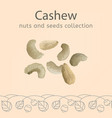 cashew image vector image vector image