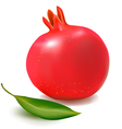 fresh pomegranate vector image
