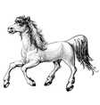 horse sketch vector image