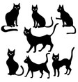 black cat silhouettes vector image