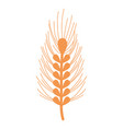 healthy wheat organ plant nutricious vector image vector image