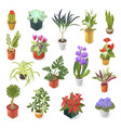 home plant for green decoration isometric vector image vector image