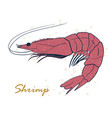 shrimp sea caridea animal hand drawn vector image vector image
