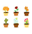 beautiful decorative modern flowers in clay pots vector image