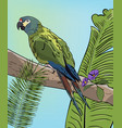 green macaw parrot on branch vector image
