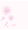 chamomile pink vector image vector image