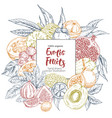 exotic fruits square banner vector image vector image