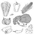 vegetables corn mushrooms doodle vector image