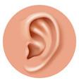 closeup ear organ hearing human health care vector image vector image