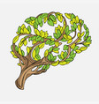 healthy brain concept tree vector image