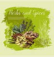 herb and spice sketch poster healthy food design vector image vector image