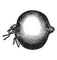 jigger flea vintage vector image vector image