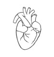 realistic anatomical heart vector image