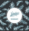 round label decorated by rosemary sprig drawn with vector image vector image