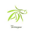 tarragon herb vector image
