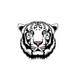 white tiger isolated on white backgr vector image vector image
