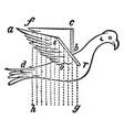 borelli bird with artificial wings vintage vector image vector image