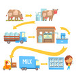 production and processing milk stages set of vector image vector image