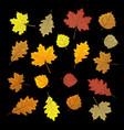 set of colorful autumn leaves design elements