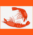 shrimps isometric vector image