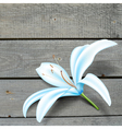 Realistic Blue Lily Flower vector image vector image