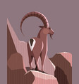 mountain goat in the light of the setting sun vector image