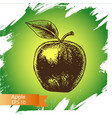 sketch - apple - vector image vector image