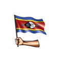 swaziland flag and hand on white background vector image