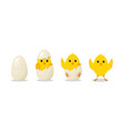 chick hatch from egg step from cracked to hatch vector image