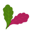 green and red salad leaves vector image vector image