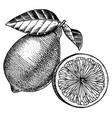 lemon hand drawn image vector image