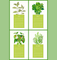 sage parsley chile and rosemary spices collection vector image