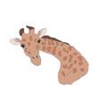 giraffe head color vector image vector image