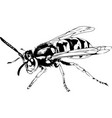 large striped wasp with a sting hand-drawn vector image
