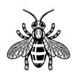 honey bee in monochrome style vector image