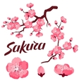 Japanese sakura set of branches and stylized vector image vector image