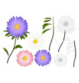 purple pink and white aster outline vector image vector image
