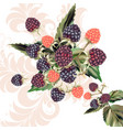 background with raspberry and swirls vector image vector image