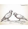 Dove bird vector image vector image