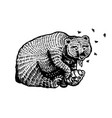 grizzly brown bear eats honey in a wild animal vector image vector image
