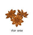 star anise spice vector image