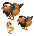 family of birds on white background vector image