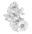 hand drawn summer vintage bouquet rustic anemone vector image