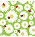 seamless pattern chamomile vector image