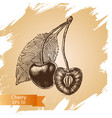 sketch - cherry vector image