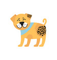 smiling pug with collar image vector image